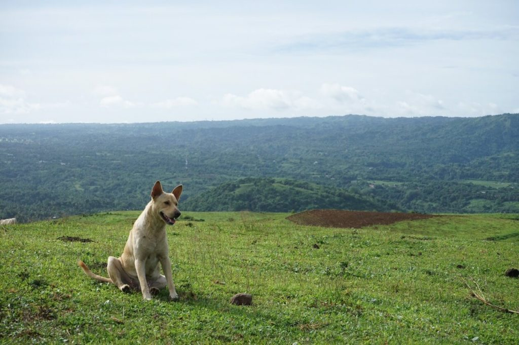 tagaytay-landscape